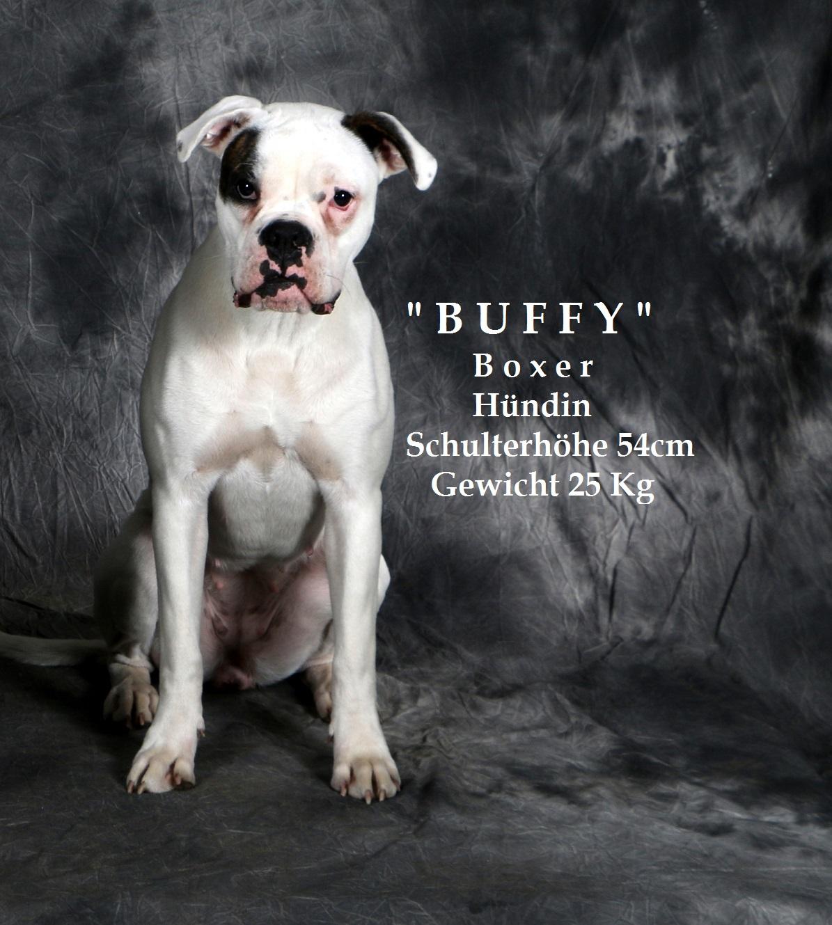 Boxer - Buffy