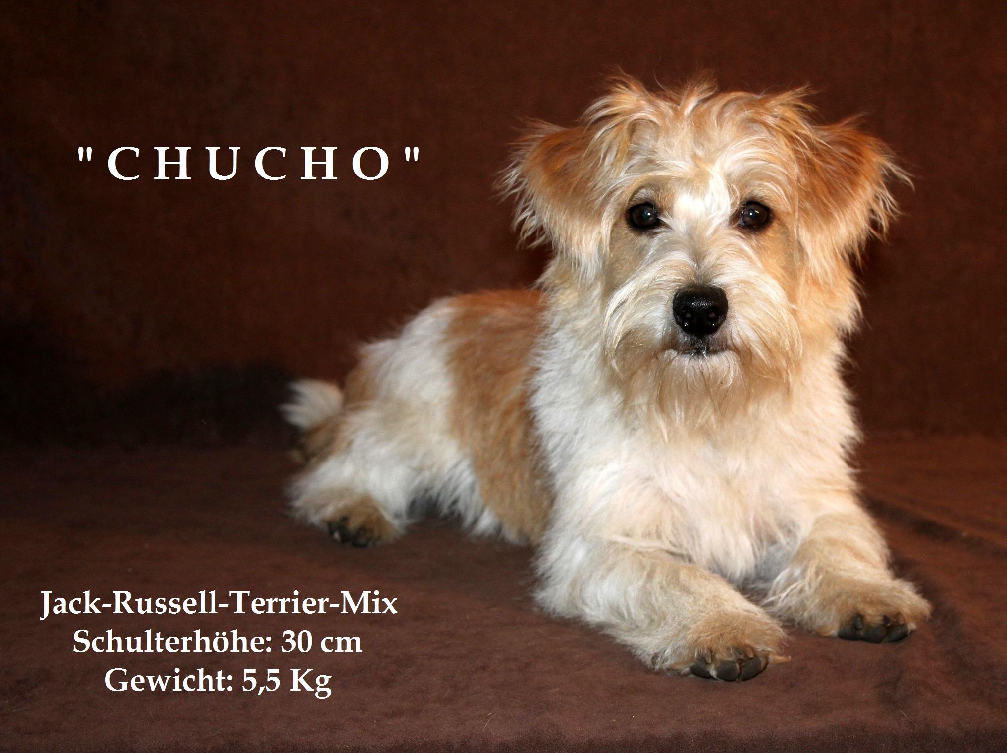 Chucho 6 beschriftet
