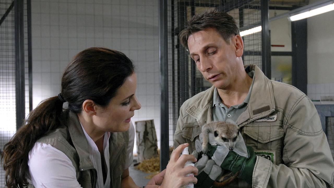 Erdmännchen bei Tierärztin Dr. Mertens