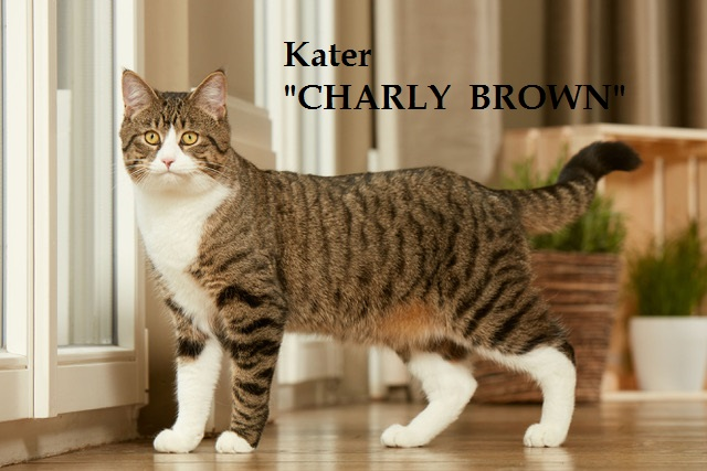 Kater Charly Brown