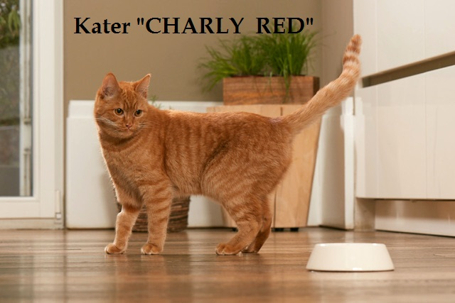 Kater Charly Red