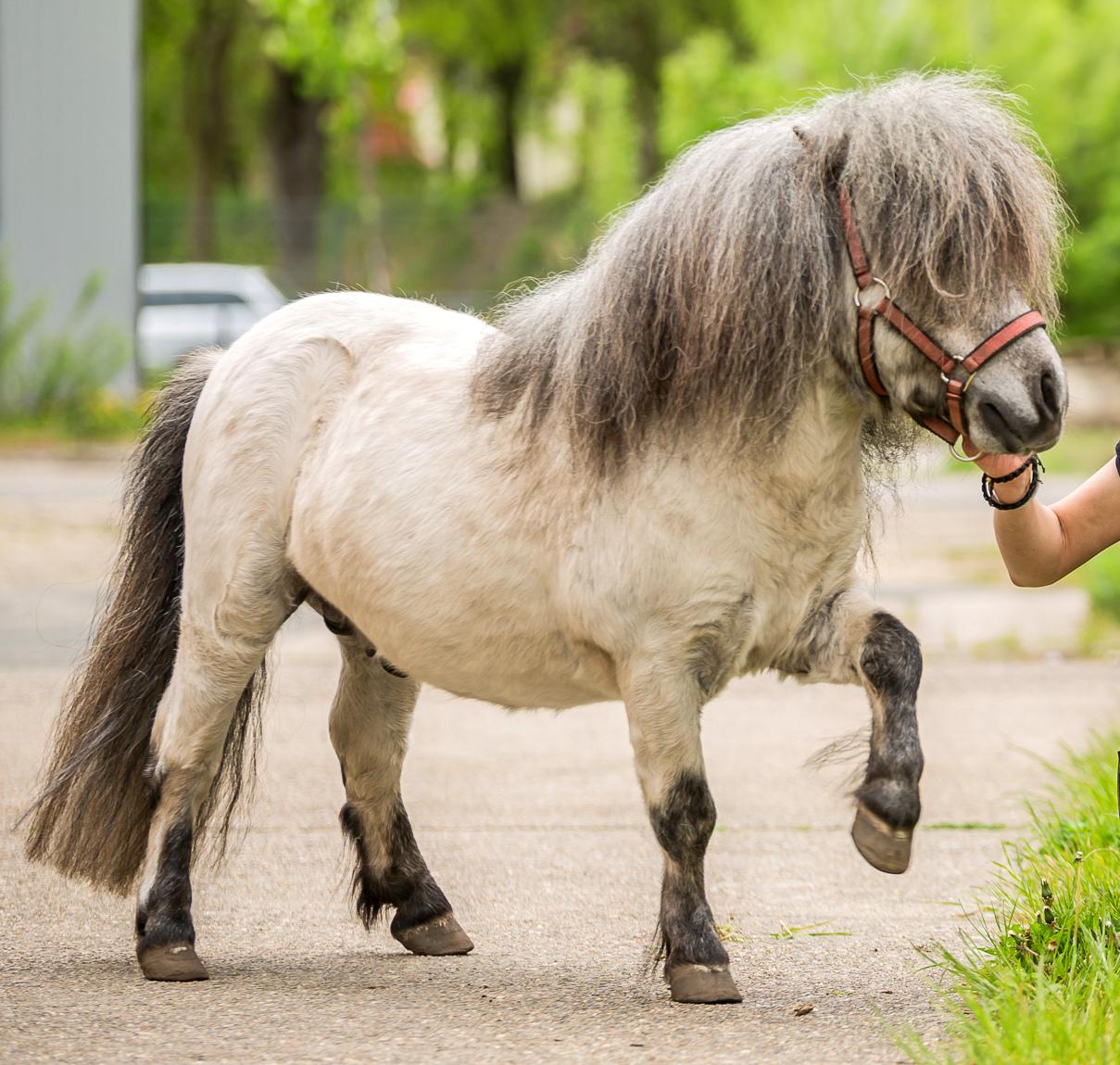 Pony - Diego